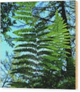 Natural Beauty Wood Print