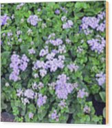 Natural Bush With Purple Small Flowers. Wood Print