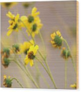 Natural Flowers Wood Print