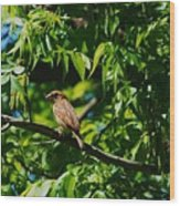 Natural Insect Repellant Wood Print