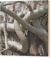 Natural Knot Wood Print by Dagmar Batyahav