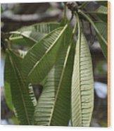 Natural Leaf Wood Print