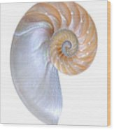 Natural Nautilus On White Vertical Wood Print