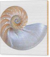 Natural Nautilus Seashell On White Wood Print