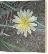 Natural... White And Yellow Flower Wood Print