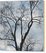 Nature - Tree in Toronto Wood Print