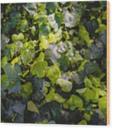 Nature Abstract 5 Wood Print