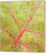 Nature Abstract Sea Grape Leaf Wood Print