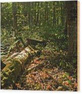 Nature At Work Wood Print