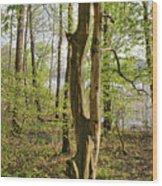Nature, Bare Tree. Wood Print