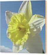 Nature Daffodil Flowers Art Prints Spring Nature Art Wood Print