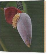 Nature Ear Wood Print