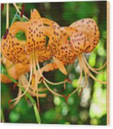 Nature Floral Orange Tiger Lily Flowers Baslee Troutman Wood Print