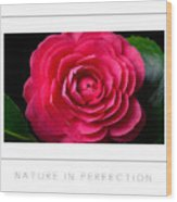 Nature In Perfection Poster Wood Print