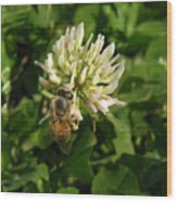 Nature In The Wild - Clover Honey Wood Print