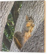 Nature In The Wild - Keeping Watch Wood Print