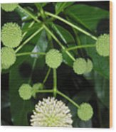 Nature In The Wild - Natural Pom Poms Wood Print