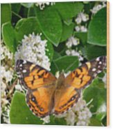 Nature In The Wild - On Golden Wings Wood Print