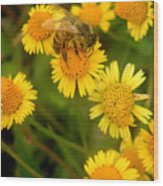 Nature In The Wild - The Nectar Company Wood Print