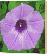 Nature In The Wild - Glory In Purple Wood Print