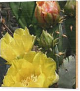 Nature In The Wild - Two Blooms And Counting Wood Print