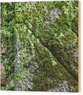 Nature - Living Retention Wall 1 Wood Print