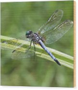 Nature Macro - Blue Dragonfly Wood Print