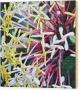 Nature Museum Botanical Wood Print