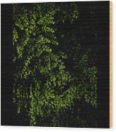 Nature Plants Wood Print