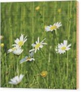 Nature Spring Scene White Wild Flowers Wood Print