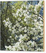 Nature Tree Landscape Art Prints White Dogwood Flowers Wood Print