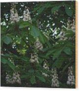 nature Ukraine blooming chestnuts Wood Print