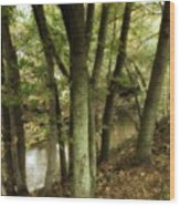 Nature Walk Along The Stream Wood Print