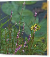 Nature Water Garden Wood Print