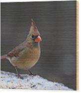 Natures Birds 54 Wood Print