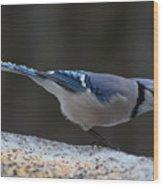 Natures Birds 65 Wood Print