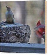 Natures Birds 68 Wood Print