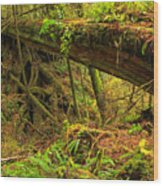 Nature's Bridge Wood Print