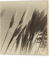 Natures Brushes Wood Print