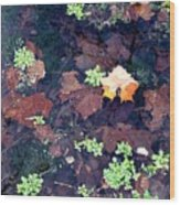 Natures Canvas Wood Print