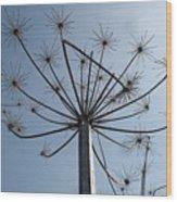 Natures Carnival Wood Print