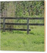 Natures Fence Wood Print