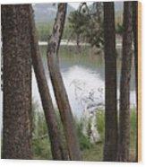 Nature's Frame Wood Print