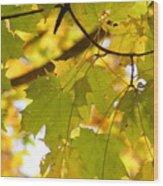 Natures Glow Wood Print