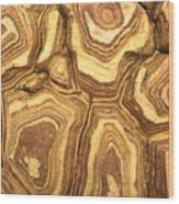 Nature's Interesting Patterns Wood Print