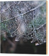 Nature's Lace Wood Print