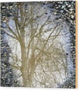 Natures Looking Glass 4 Wood Print
