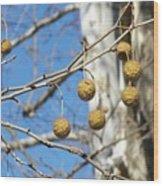 Nature's Ornaments Wood Print