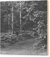 Natures Path Wood Print