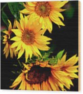 Natures Sunflower Bouquet Wood Print
